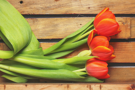 Tulips on a wooden background Stock Photo