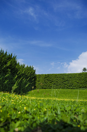 shrubbery: Grass and trees Wall (shrubbery) with sky in the background