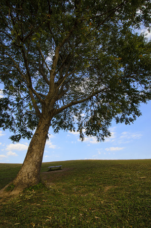 overbearing: Large tree on a grassy hill with leaves and bench