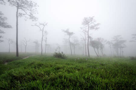 Nature at Phu Soi Dao National Park, Uttaradit, Phitsanulok province, Rainforests and pine trees in Thailand.