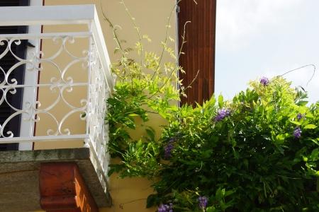 foglie: dettaglio di balcone con pianta rampicante Stock Photo