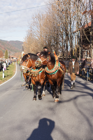 totaled: Schliersee, Germany - November 8, 2015: Every year on the 1st Sunday in November the Idillically horse procession, named Leonhardi Bavarian Schliersee in commemoration of the patron St. Leonhard instead. With the draft horses go from Schliersee to Fischha