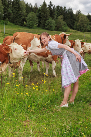 cattle wire: Young Bavarian milkmaid in dirndl, caressing your cows on the pasture.