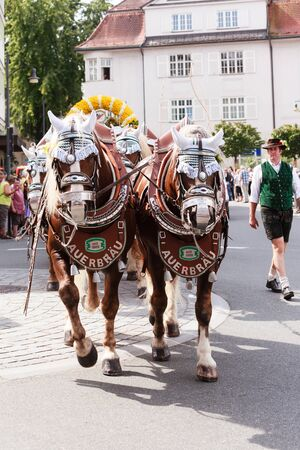 Rosenheim, Germany - September 4, 2016: horse team the AuerBräu brewery at Thanksgiving Parade in Rosenheim  Germany