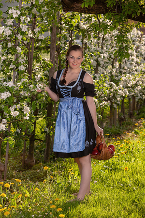 Bavarian young woman in dirndl standing by a apple tree