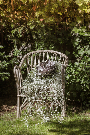 View of a plant in a chair in the garden