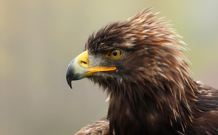 Head of an eagle Imagens