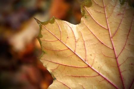 close up: Close Up Leaf Stock Photo