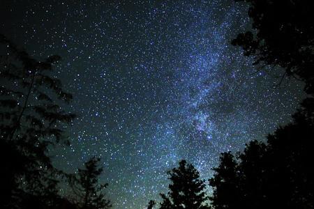 star sky: Stars and Trees