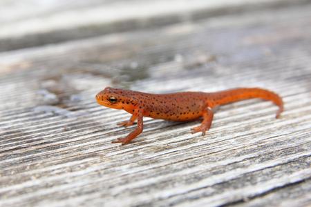 newt: Newt