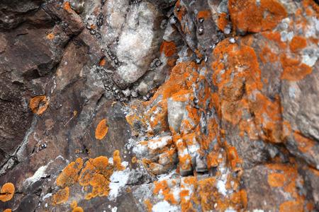 lichen: Lichen