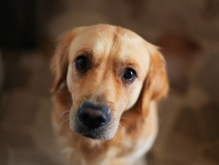 Neugieriger Hund Standard-Bild - 24684953