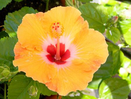 Gelbe Blume Standard-Bild - 34103804