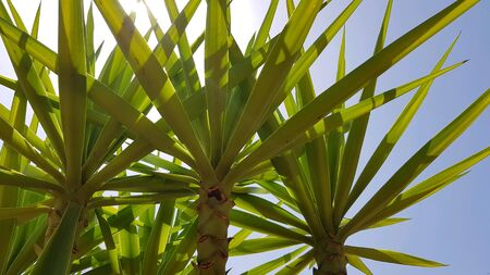 Tropical palm Standard-Bild
