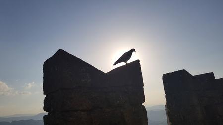 Bird in silhouette on castle wall in sunset time Standard-Bild - 105981622