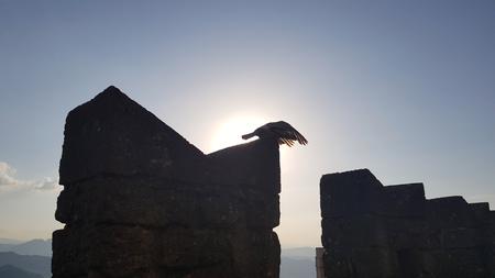Bird in silhouette on castle wall in sunset time Standard-Bild - 105981624