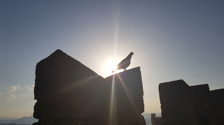 Bird in silhouette on castle wall in sunset time