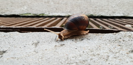 Brown snail over a brown gate