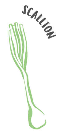 Green onion or scallion hand painted with ink brush isolated on white background