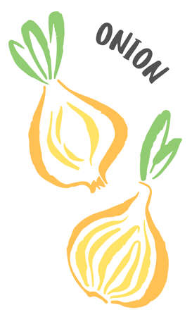 Set of onion drawing hand painted with ink brush isolated on white background. Vector illustration