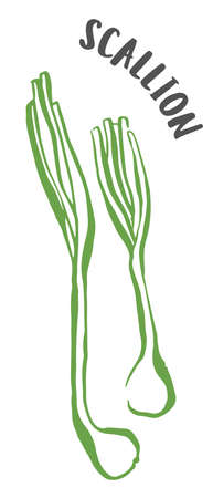 Green onion or scallion drawing hand painted with ink brush isolated on white background. Vector illustration