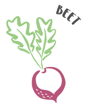 Beet drawing hand painted with ink brush isolated on white background. Vector illustration
