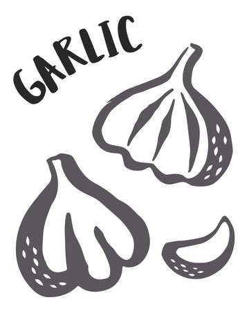 Garlic set hand painted with ink brush isolated on white background