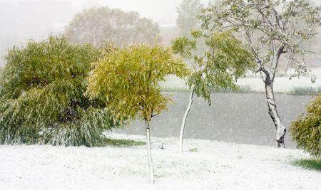 Early snowfall in the autumn park photo