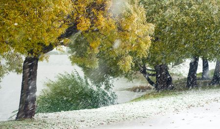 Early snowstorm in the autumn park