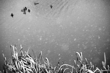 Early snowfall over the pond in black and white photo