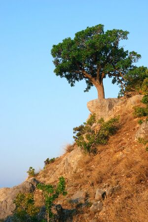 Single tree standing on the top of a hill Stock Photo