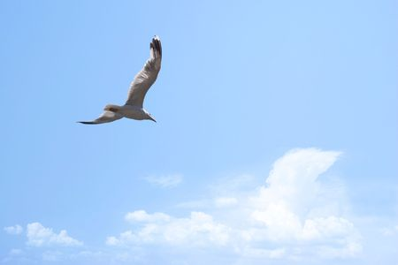 Flying seagull in the blue sky Stock Photo