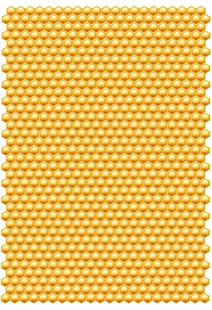 Bee honeycombs pattern isolated on a white background photo