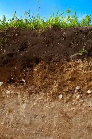 Une coupe de sol avec différentes couches visibles et de l'herbe sur le dessus Banque d'images