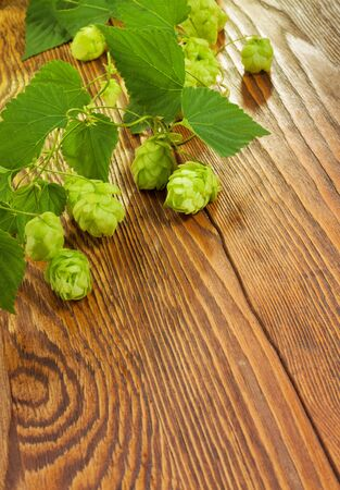 Hop plant on a wooden table Stock Photo - 17387192
