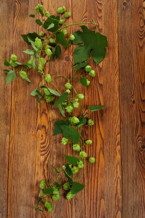 Hop plant on a wooden table Stock Photo - 17387184