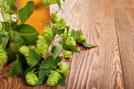 Pint and hop plant Stock Photo - 17387178