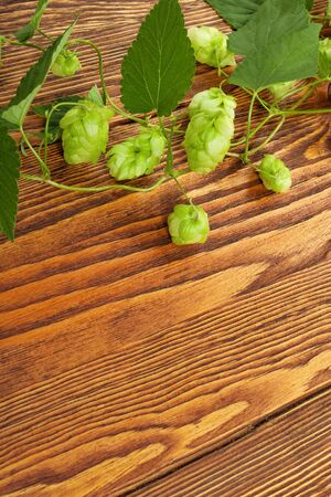 Hop plant on a wooden table Stock Photo - 17387187