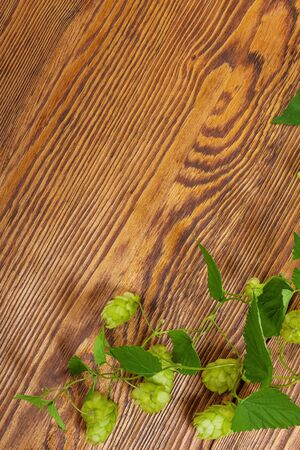 Hop plant on a wooden table Stock Photo - 17387185