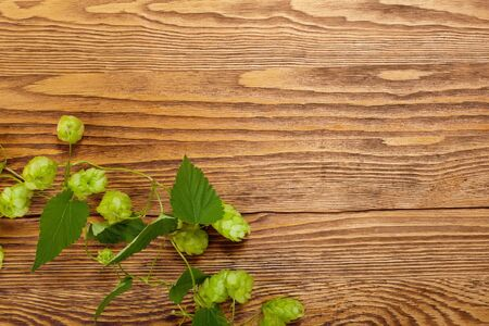Hop plant on a wooden table photo