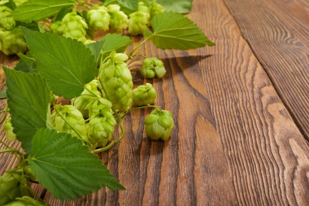 Hop plant on a wooden table Stock Photo - 17387186