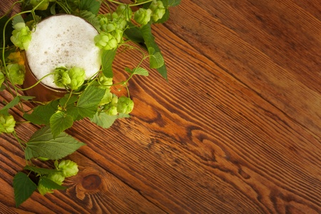 Pint and hop plant Stock Photo - 17387177