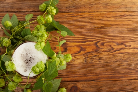 Pint and hop plant Stock Photo - 17387190