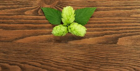 humulus: Hop plant on a wooden table