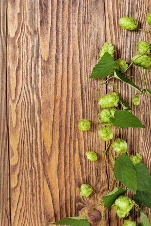 hop plant: Hop plant on a wooden table