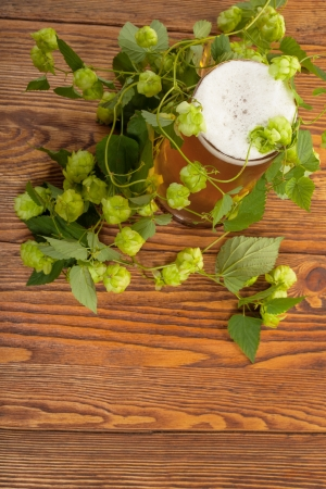 Pint and hop plant photo