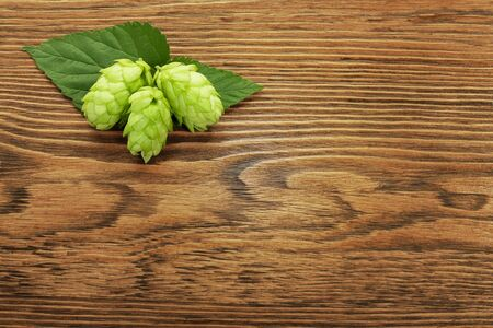 Hop plant on a wooden table Stock Photo - 17387180