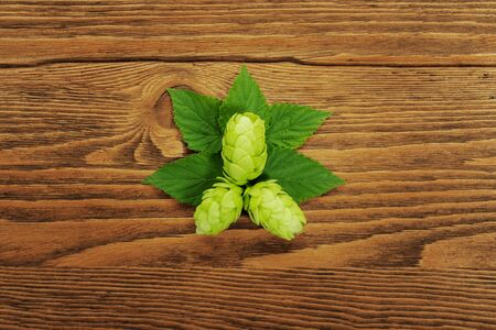 Image of a hop plant on a wooden table. Close up. File contains clipping path photo