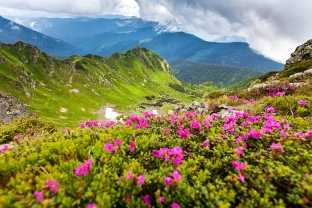 massif: Image of a beautiful carpathian mountains. Marmaros massif in eastern Carpathians. Stock Photo