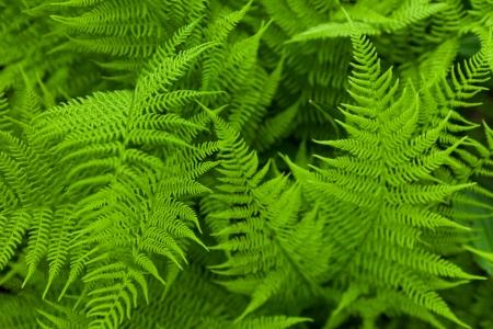 Fresh fern. Close up